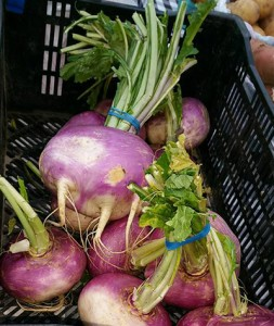 Fruitwood Farm turnips 11.23.15